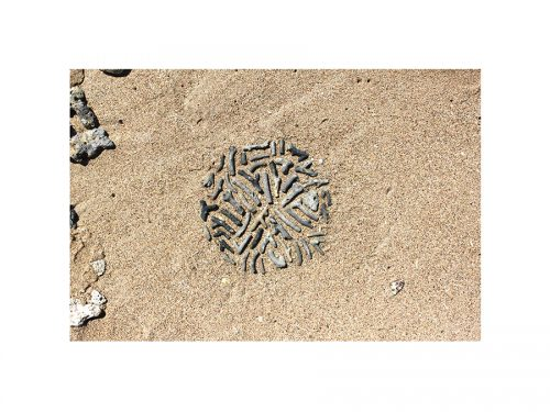 A coral fossil circle on the sand - nature art or 'land art' created in Bali