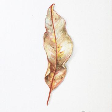 Peace Leaves