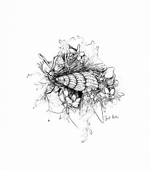 A ink drawing of a shell on flowers and leaves.