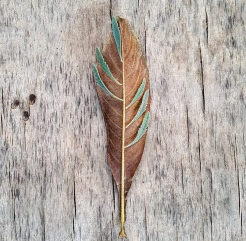 Autumn leaf with lavender leaves on top - land art created in the garden - placed on a piece of wood